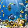 Photo of a tropical Fish on a coral reef — Stock Photo