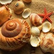 Sea shell on sand — Stock Photo #7544163