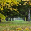 Nice park in autumn — Stock Photo #7544251