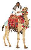 бедуинов на верблюде — Стоковое фото