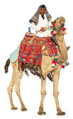 Bedouin on camel — Stockfoto