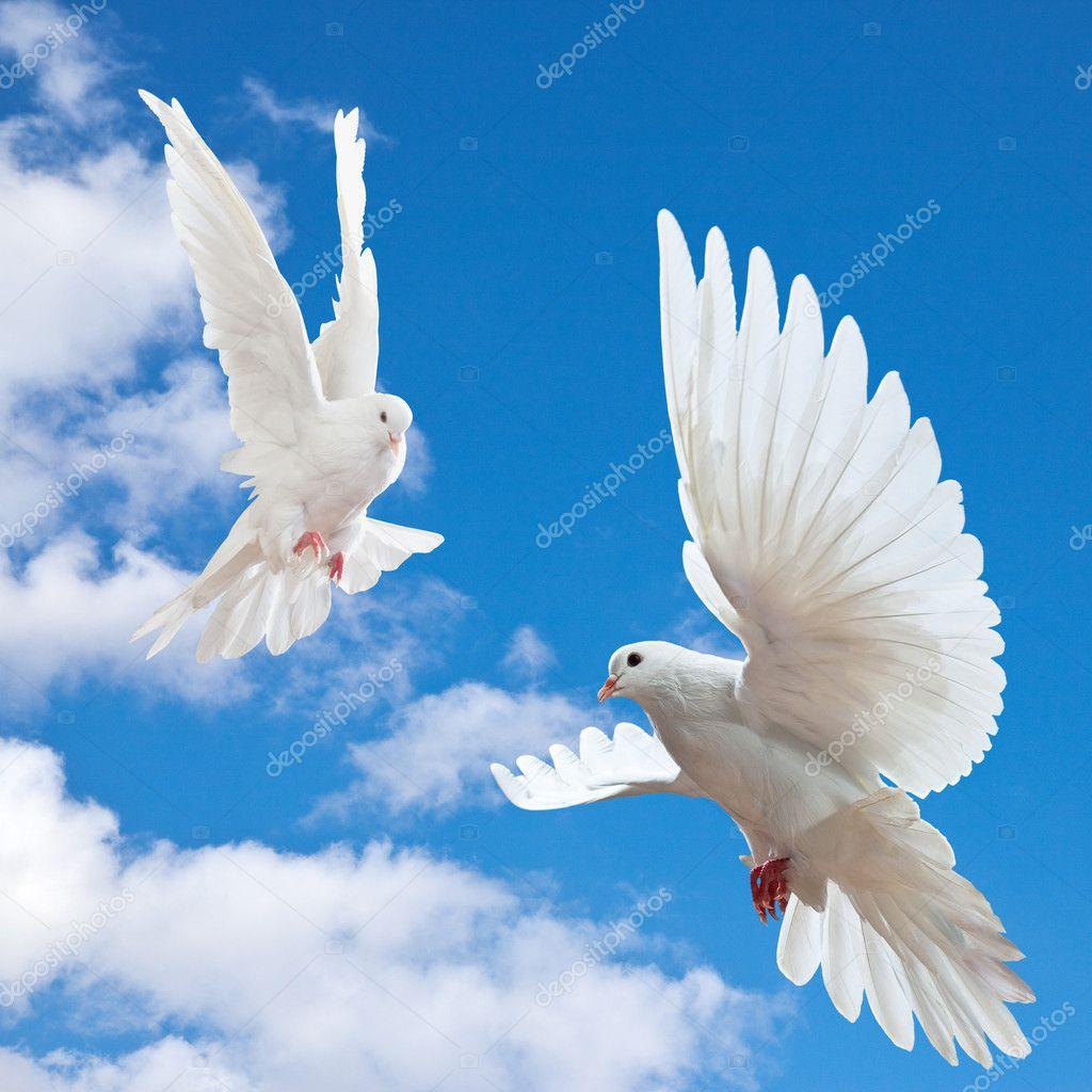 Скачать картинки голуби