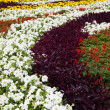 FlowerBed — Stock Photo #7087729