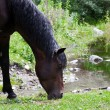 Horse eats the grass — Stockfoto