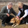 Elderly pair caresses a dog — Stock Photo