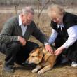 starší pár hladí psa — Stock fotografie