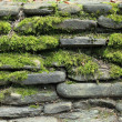 Moss on stone wall — Stock Photo