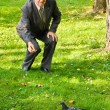 Senior man feeds dove in park — Stock Photo
