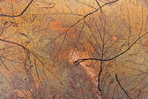 Grunge autumn background — Stock Photo