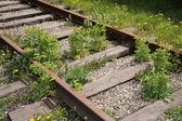 Trenes olvidados — Foto de Stock