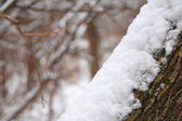 Snowbank on tree trunk — Stock Photo