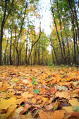 Yellow leaves on earth in park — Stock Photo