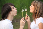 Young pair blows on dandelions in hands — Stock Photo