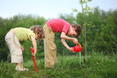 Boy and girl pour on planted tree — Stock Photo