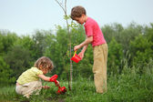 Kids plant the tree — Stock Photo