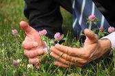 Man's hands, grass, clover flowers — Foto de Stock