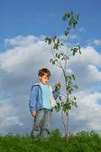 Boy plants the tree — Stock Photo