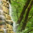 Mountain falls in wood — Stock Photo