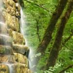 Mountain falls in wood — Stock Photo