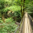 Stock Photo: Wooden suspension bridge in wood, wide angle