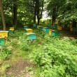 Beegarden - 