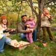 Gathering apples - Stock Photo
