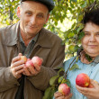 Stock Photo: Middleaged mand womwith apples