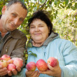 Stock Photo: Middleaged man and woman with apples
