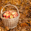 Basket of apples — Stock Photo #7431028