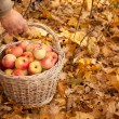 Basket of apples — Stock Photo #7431034
