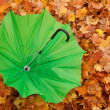 Stock Photo: Umbrellas in autumn park