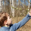 The boy looks at full bud in spring park — Stock Photo #7431881