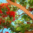 Tropical tree — Stock Photo