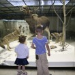 Children in the natural museum — Stock Photo