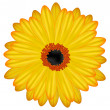 Stock Photo: Gerbera flower