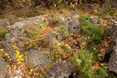 Stones among fallen down leaves — Stock Photo