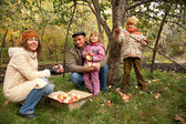 Gathering apples — Stock Photo