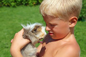 Boy plays with Guinea pig on meadow — Stock Photo