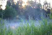 Dawn in the foggy morning — Stock Photo