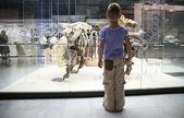 少年と恐竜の骨格 — ストック写真