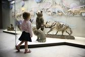 Little girl in natural museum — Stock Photo