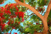 Tropical tree — Stock Photo
