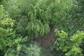 Drzewa w deszczu — Zdjęcie stockowe