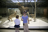 Children in the natural museum — Stockfoto