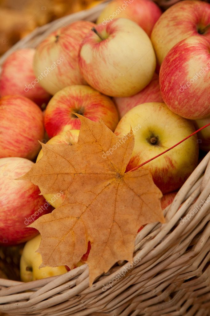 Wattled basket with apples among maple leaves  Stock Photo #7431031
