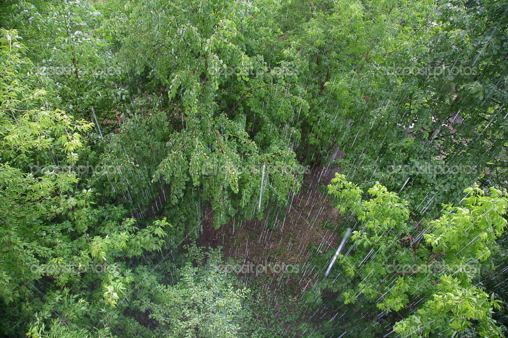 Trees in the rain — Stock Photo #7436031