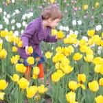 Little girl on field of tulips — Stock Photo