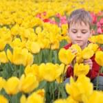 Boy on field of tulips — Stock Photo