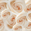 Stock Photo: White roses