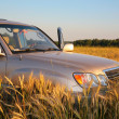 Stock Photo: Offroad car on wheaten field